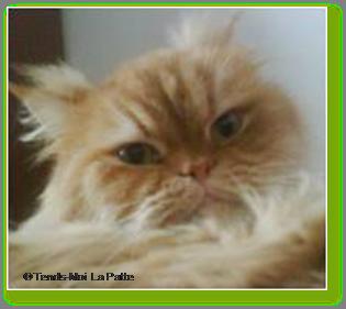 BOSTON un chat qui adore les câlins Ti-boston---oc-01-18480ee