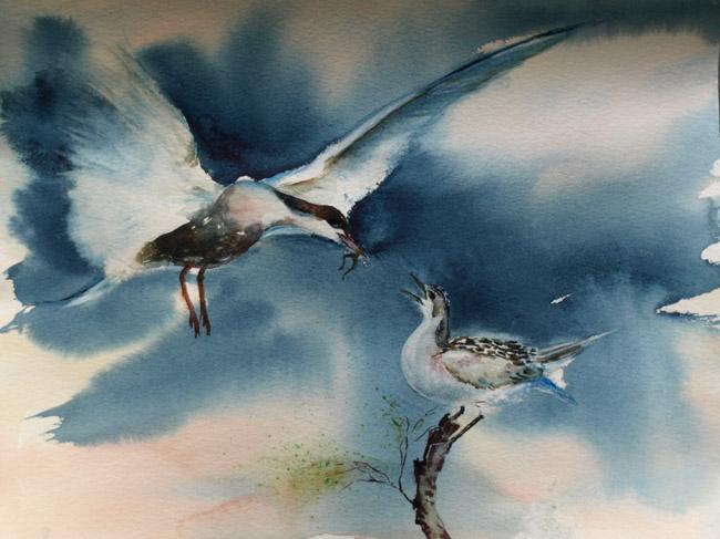 Ravitaillement en plein vol .... Oiseaux-mai-2010-p-1c16ebf