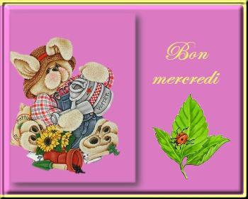 bon-mercredi-ourson-flora