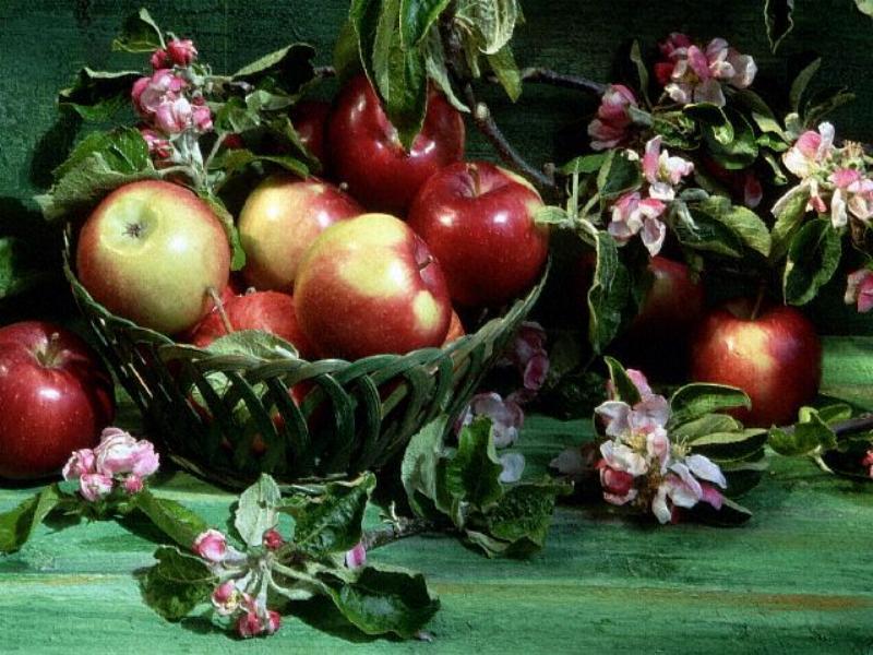 pomme-et-fleur-de-pommier-fond-d-ecran-flora